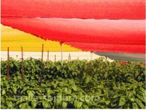 Malla sombra de color rojo y amarillo en cultivo de pimientos con casa sombra