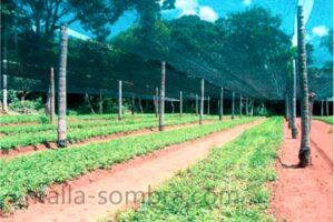 Malla sombra de color verde en cultivo de hortalizas