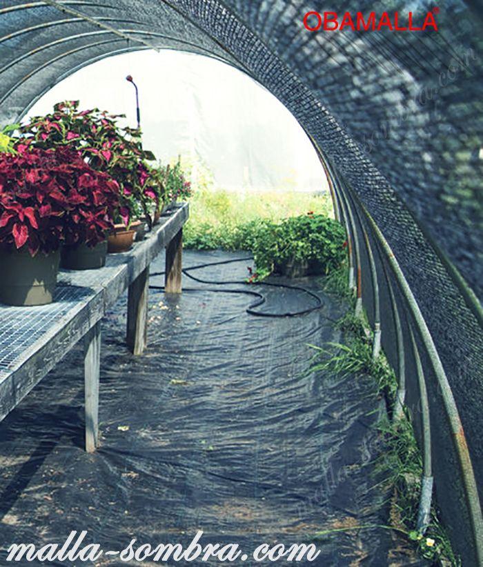 Cultivo protegido por malla sombra obamalla