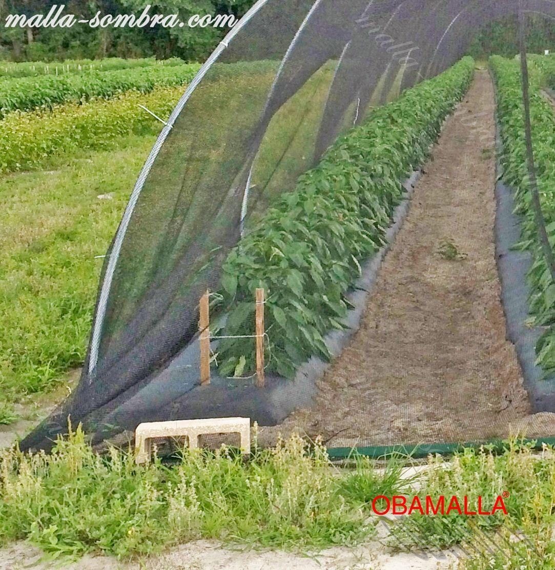 túnel malla sombra protegiendo los cultovos contra climas extremos.
