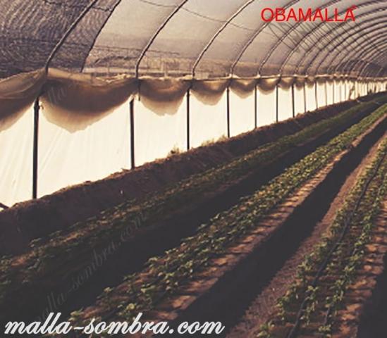 malla de sombreo protegiendo los cultivos contra la radiación solar.