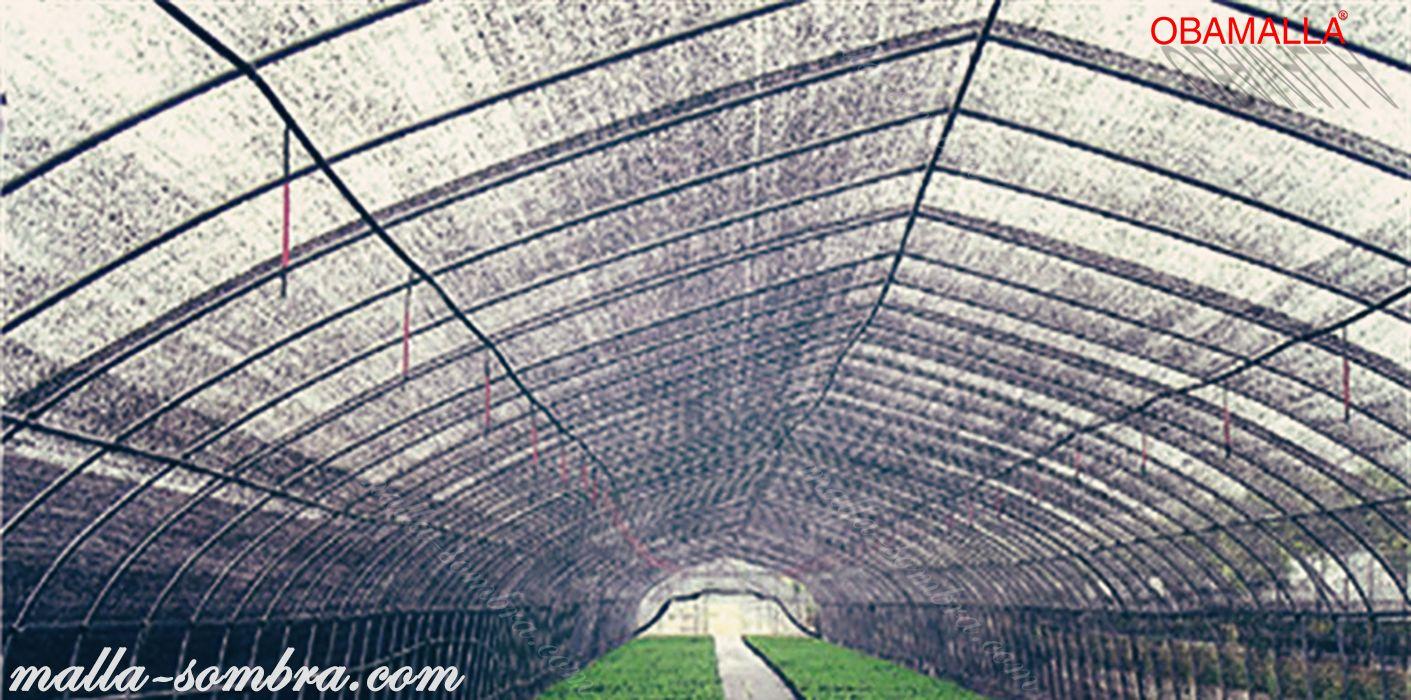 Túnel de obamalla cuida y protege los cultivos.