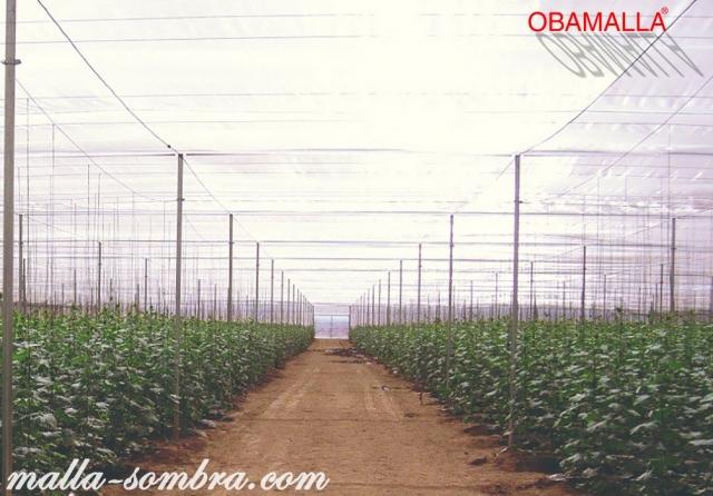 Cultivos protegidos por la malla sombra obamalla.