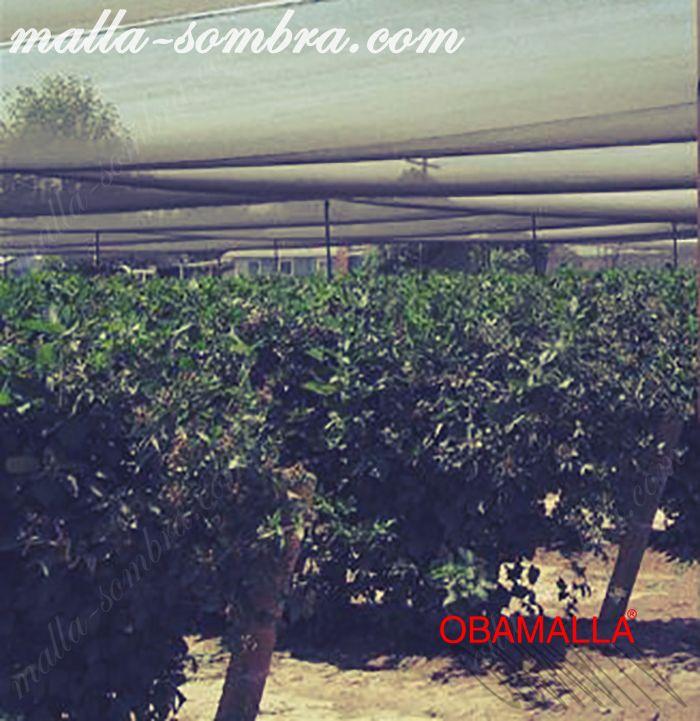 Cultivos protegidos con la media sombra.