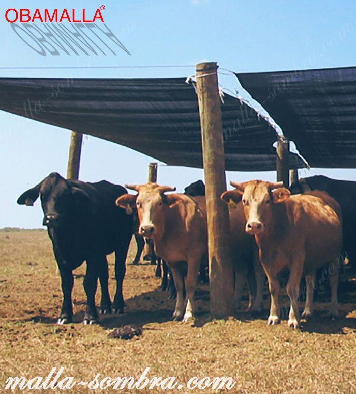 Malla sombra protegiendo al ganado