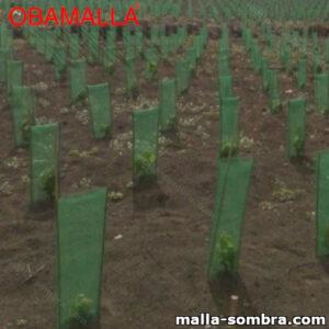 Plantas cubiertas por malla sombra obamalla